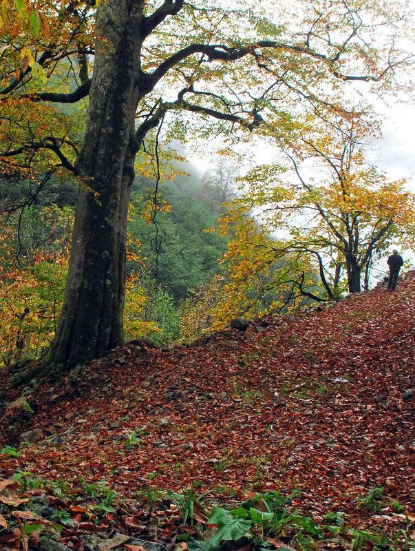 Kaçkarlardan muhteşem sonbahar manzaraları