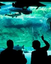 Büyük akvaryumdan inanılmaz manzaralar