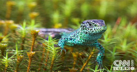 Hayvanlar aleminin en renkli kareleri