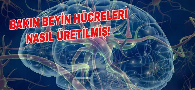 BAKIN BEYİN HÜCRELERİ NASIL ÜRETİLMİŞ!
