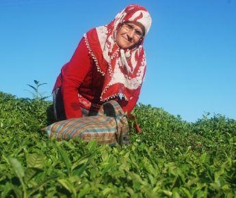 Çay üreticilerine destek