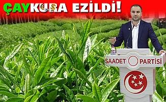ÇAYKURA EZİLDİ!