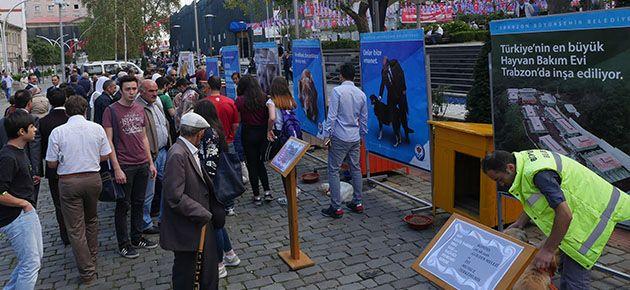 Trabzon'da hayvanlar için etkinlik düzenledi